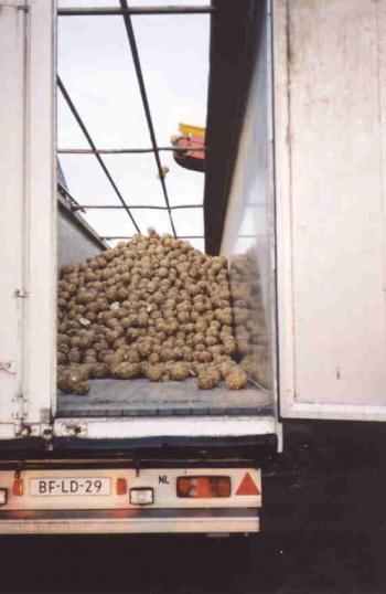 Sàn trượt tự đổ gắn container chở nông sản